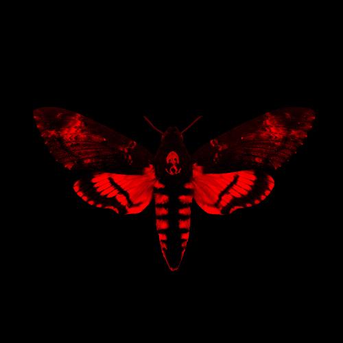 Lil-Wayne-Cover-Art